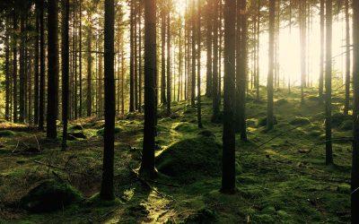 Grounding and inner refuge practice (16 min)